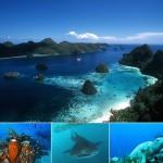Taman Nasional Teluk Cenderawasih
