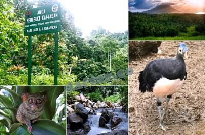 Taman Nasional Bogani Nani Wartabone Gorontalo