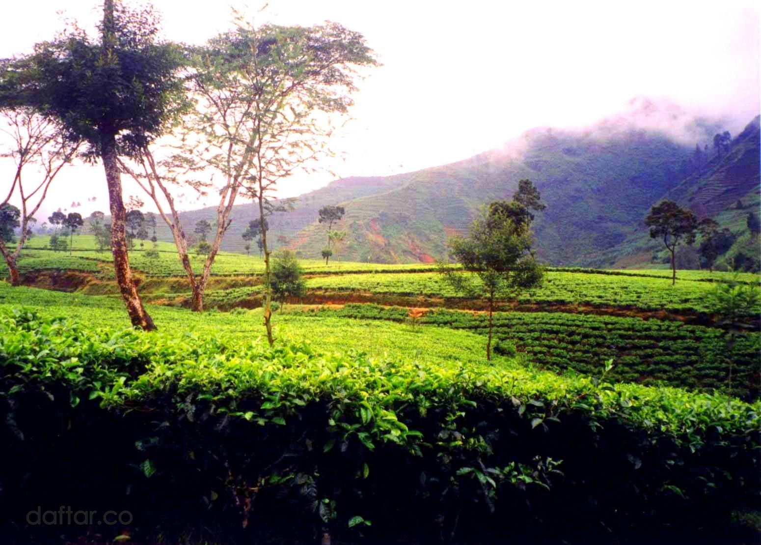 Agrowisata Bedakah