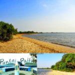 Pantai Pailus Jepara